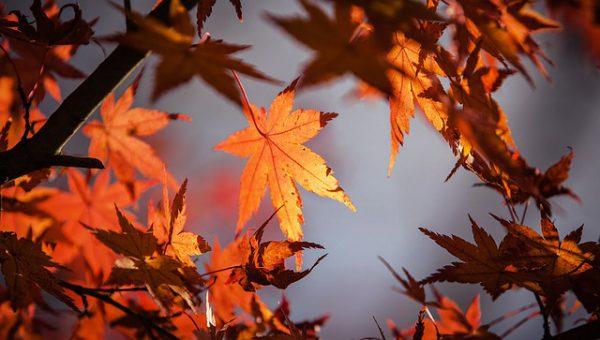 I znowu jesień!