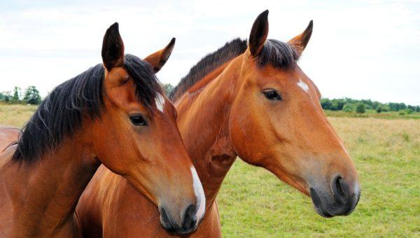 Ratujmy konie